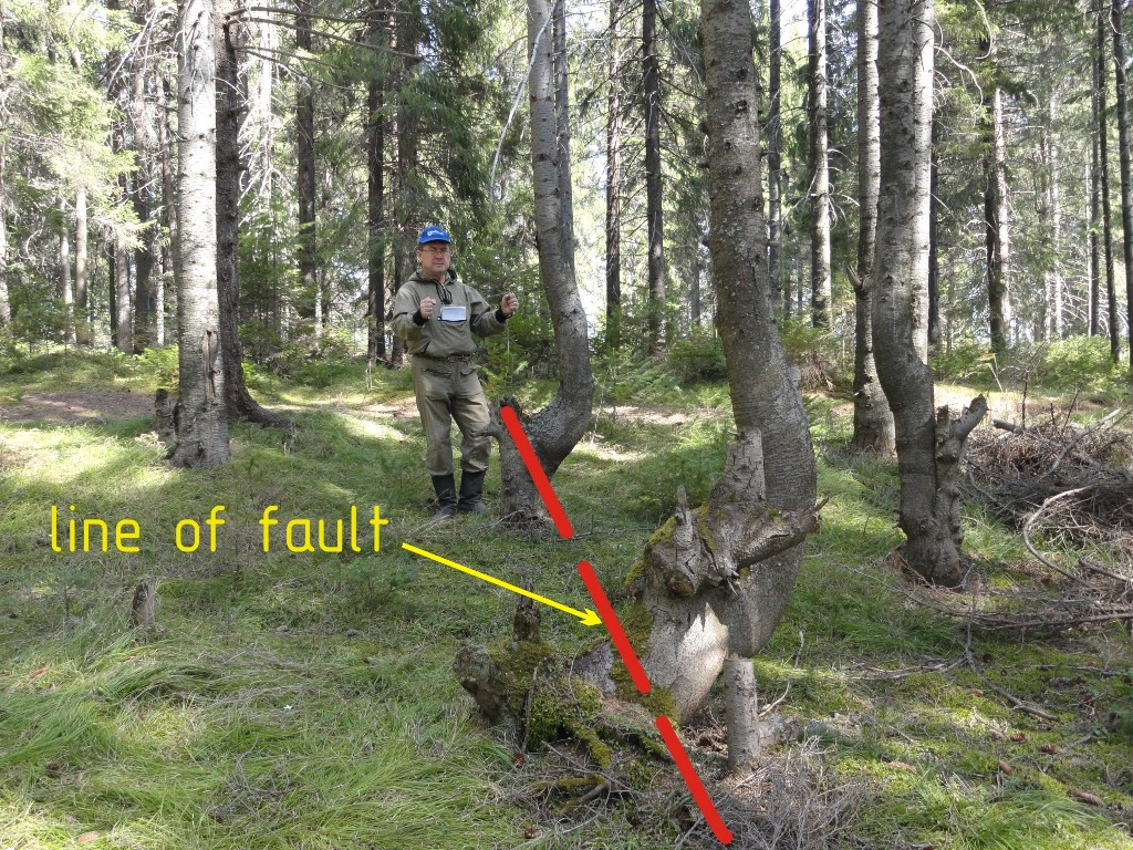 Impact of a fault on trees.
